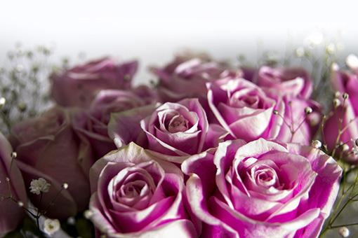 Rosas Marbella beymaflor
